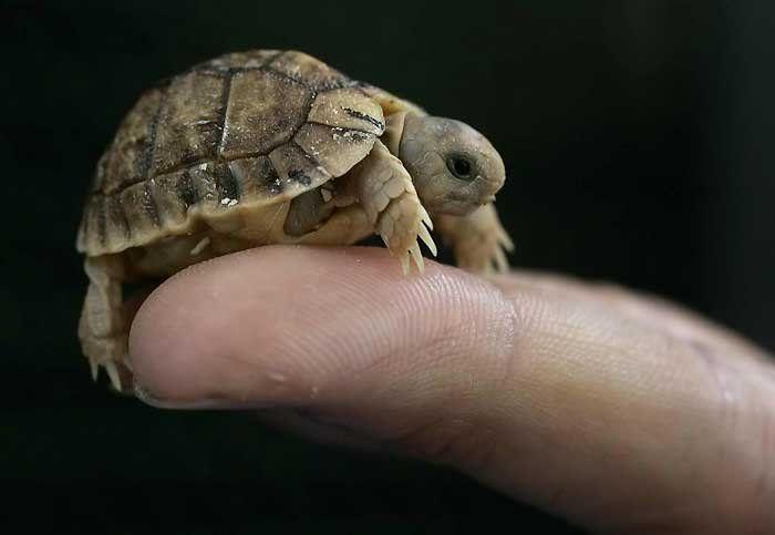 animales-bonitos-tortuguita
