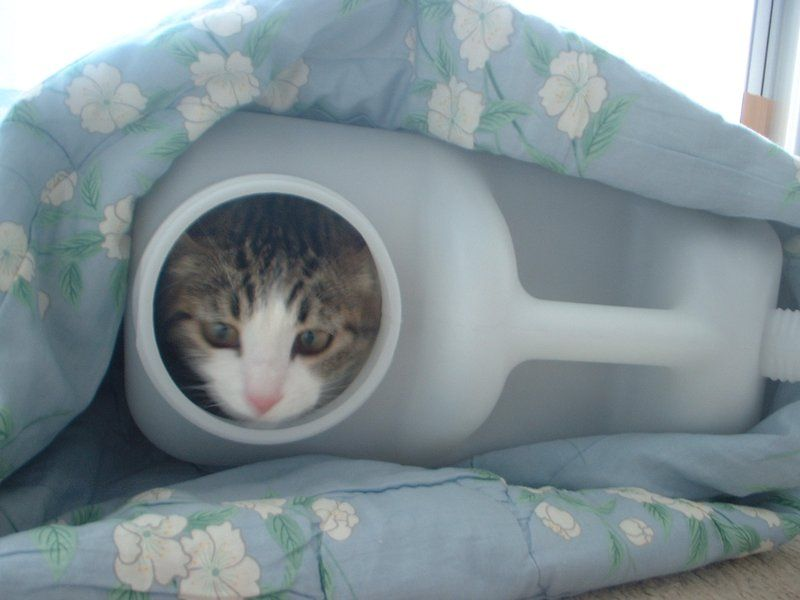animales-graciosos-gato-frasco