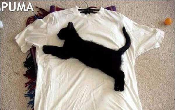 animales-graciosos-gato-negro-puma