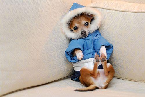 animales-graciosos-perrito