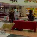 Probando comida de perro