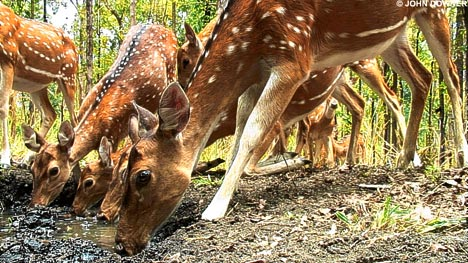daily-mail-animales-filmados-john-downer-ciervos