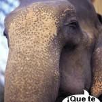 ¿Los elefantes se comunican por infrasonidos?