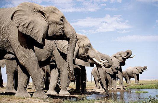 elefantes-infrasonidos-elephants-sonidos