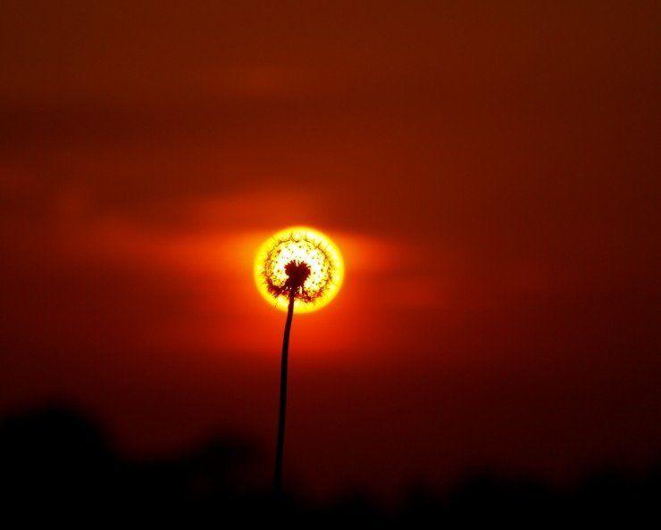 imagenes-arte-crisantemo-sol