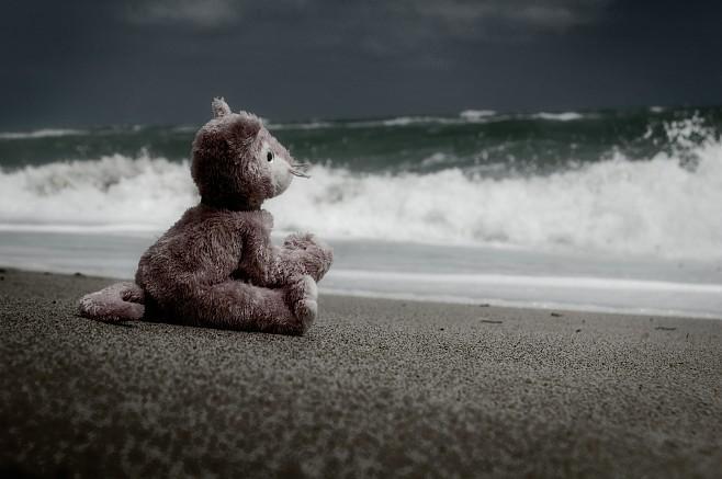 imagenes-internet-fotos-osito-playa