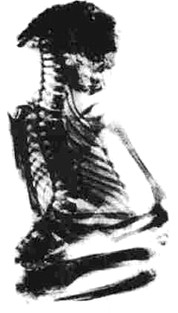 momia montanas pedro casper