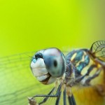 naturaleza-bella-insecto-macro