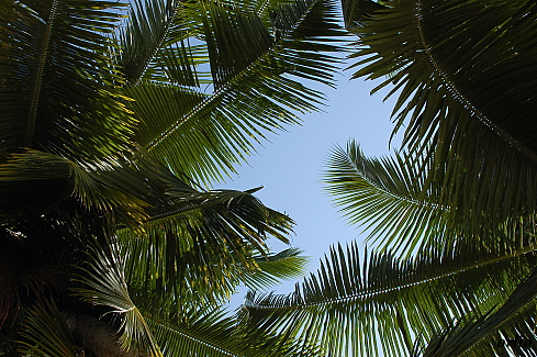 naturaleza-bella-palmeras