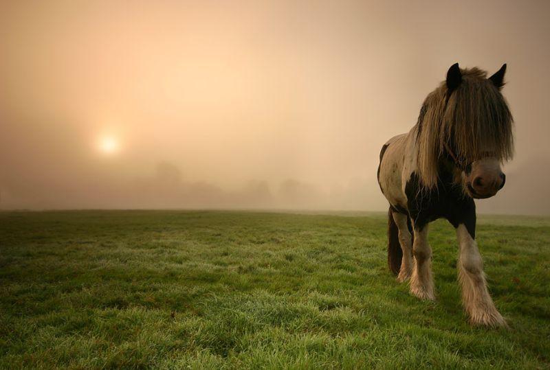 naturaleza-bella-pony-prado
