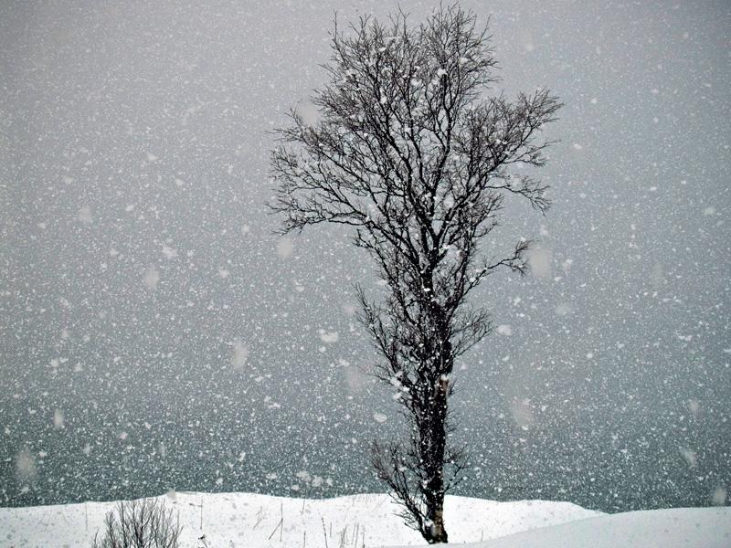 nieve-nevando