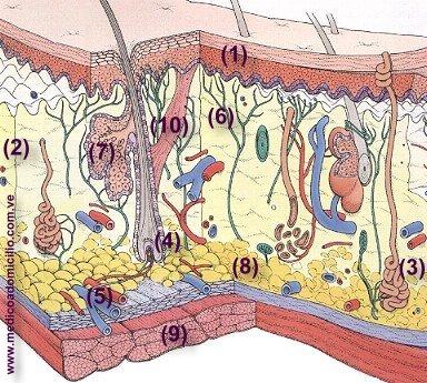 piel-hoyuelos