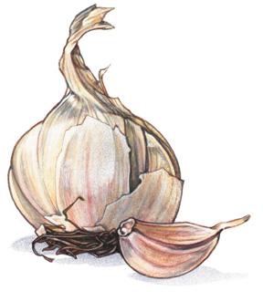 ajo cocina garlic