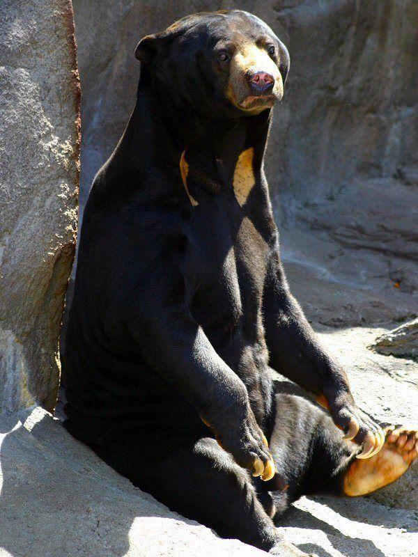 animales-bonitos-oso