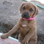 animales-bonitos-perro-cachorro