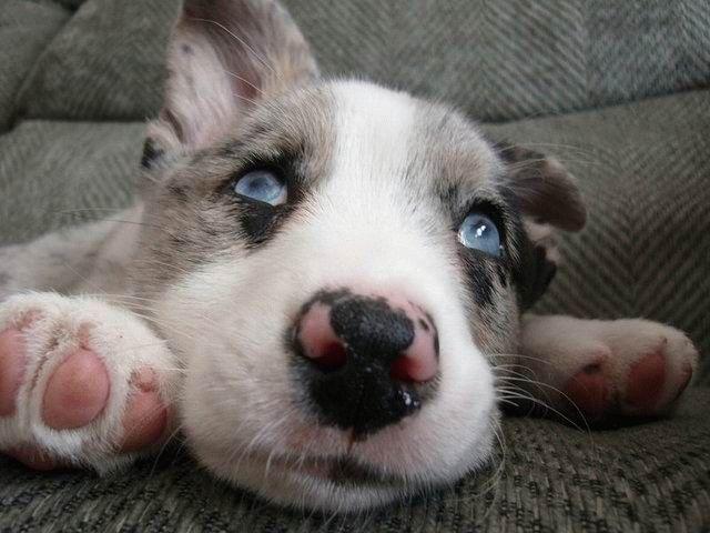 animales-bonitos-perro