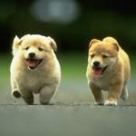 cachorros perro perritos cachorritos 10