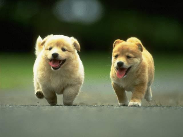 cachorros perro perritos cachorritos