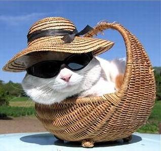 imagenes humor internet animales gato cesto