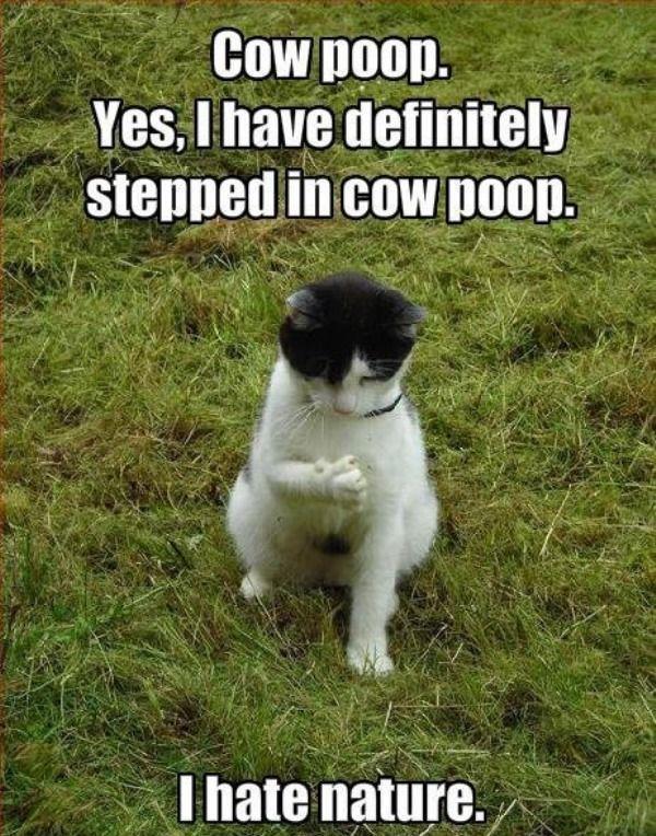 imagenes humor internet animales gato mierda