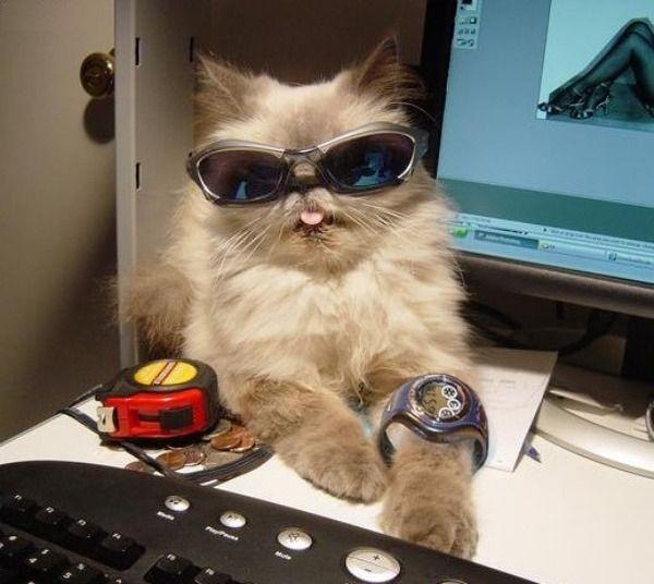 imagenes humor internet animales gato moderno