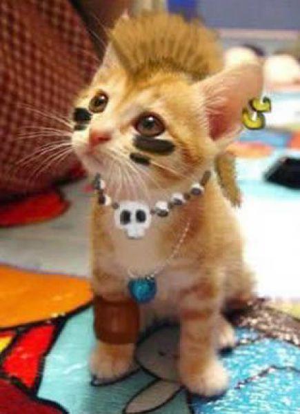 imagenes humor internet animales gato punky