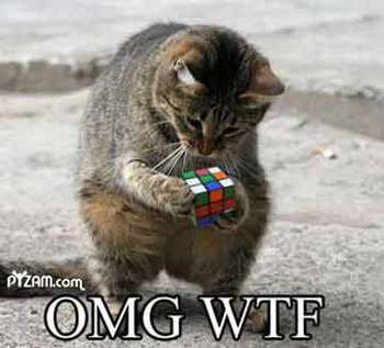 imagenes humor internet animales gato rubik cubo