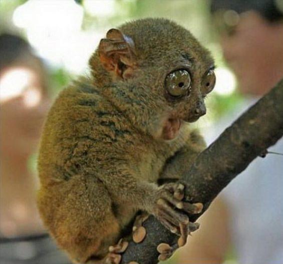 imagenes humor internet animales lemur madagascar