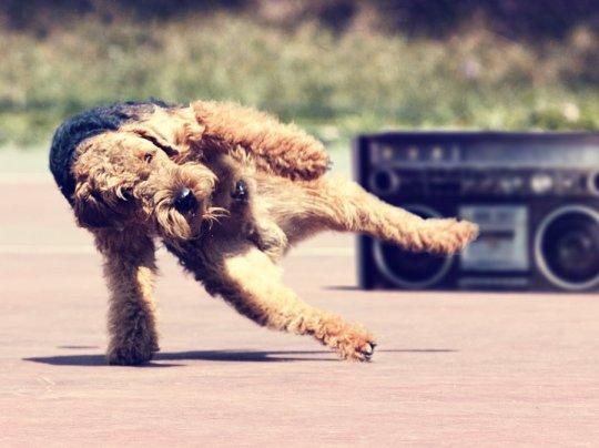 imagenes humor internet animales perro breakdance