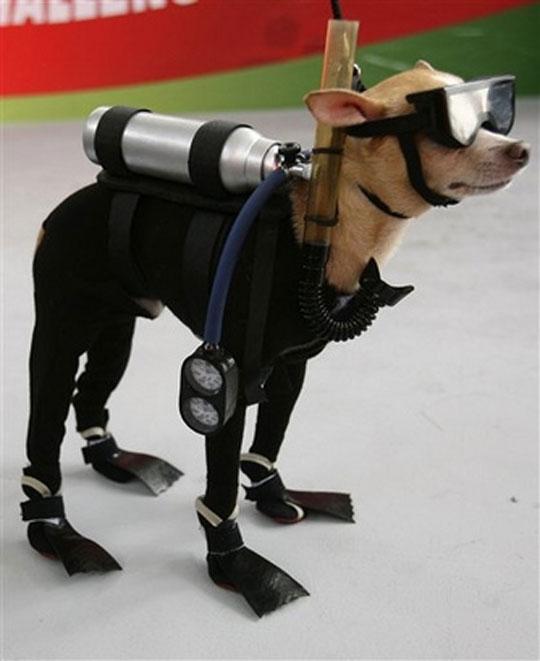 imagenes humor internet animales perro traje buzo