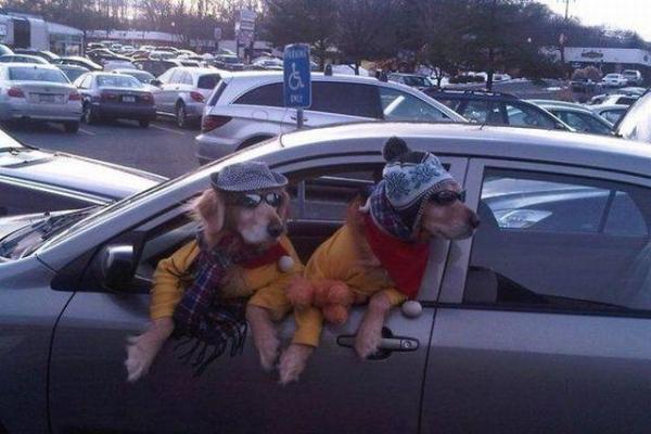imagenes humor internet animales perros disfrazados