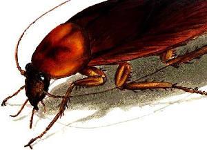 miedos-fobias-cucarachas-cockroach