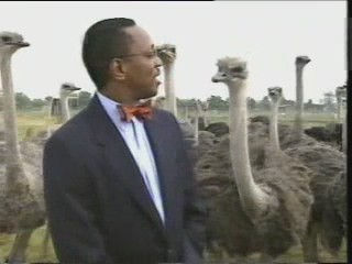 periodista reportero avestruz ataque