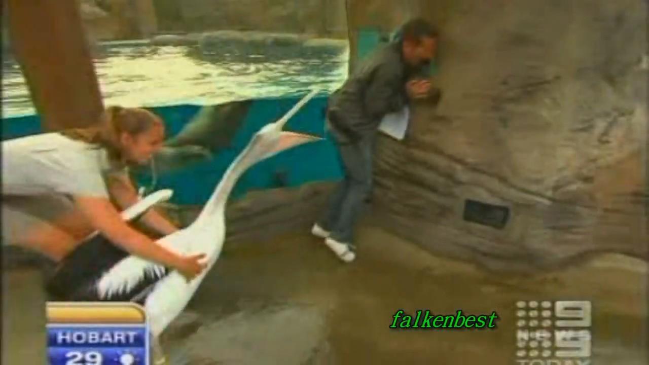 periodista reportero pelicano ataque