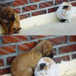 Perro y gato se hacen amigos