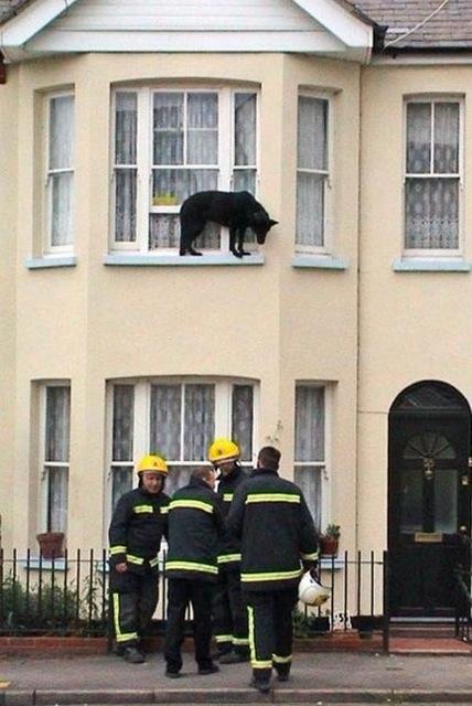 animales atrapados perro altura