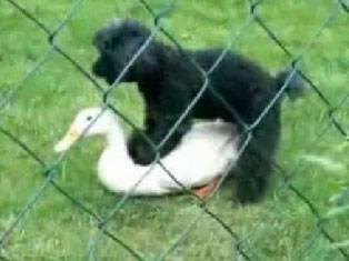 animales montando equivocaciones