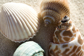 conchas-fitoterapia-belleza-salud