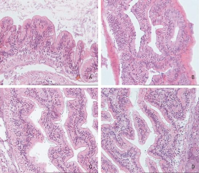 epitelio intestinal celulas regeneracion