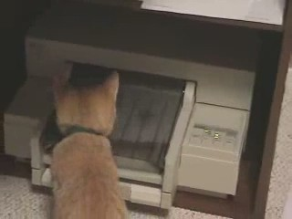 gatos impresoras cats printers 0