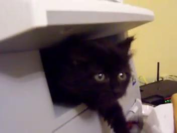 gatos impresoras cats printers 1