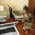 Gatos fascinados por las impresoras