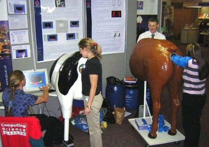imagenes-graciosas-biologos-vacas-culo