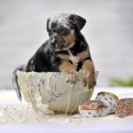 perrito perro cachorro dulce