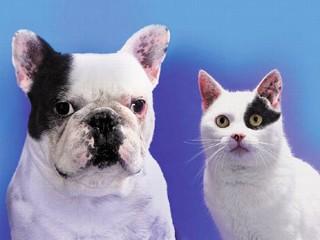 perro gato blanco negro
