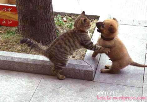 perro gato peleando