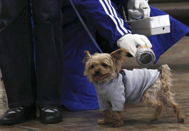 perro radiacion examen japon 2011 nuclear terremoto