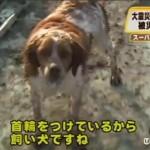 Perro fiel a su amigo tras el terremoto de Japón