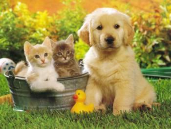 perros gatos foto bonita