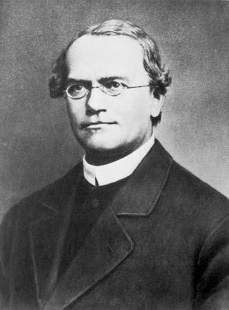 Gregor Johann Mendel adn genetica genes